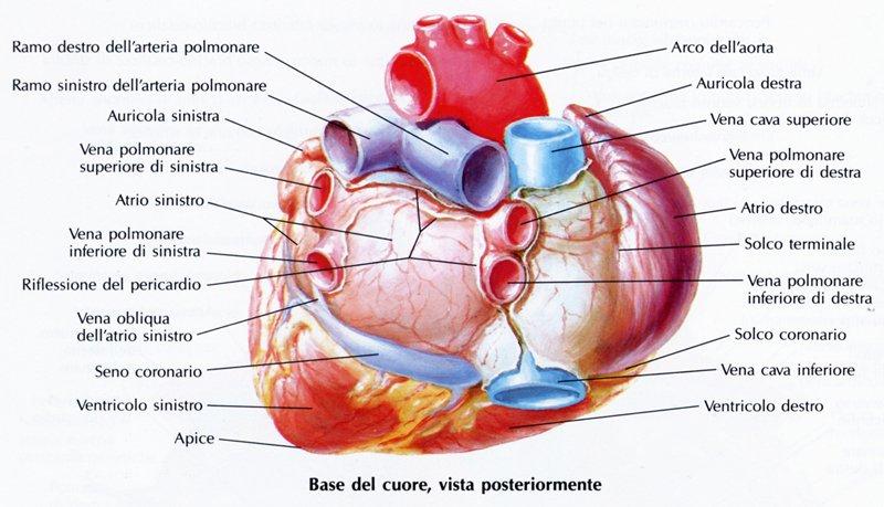 Coagulazione di laser di endovenous di vene