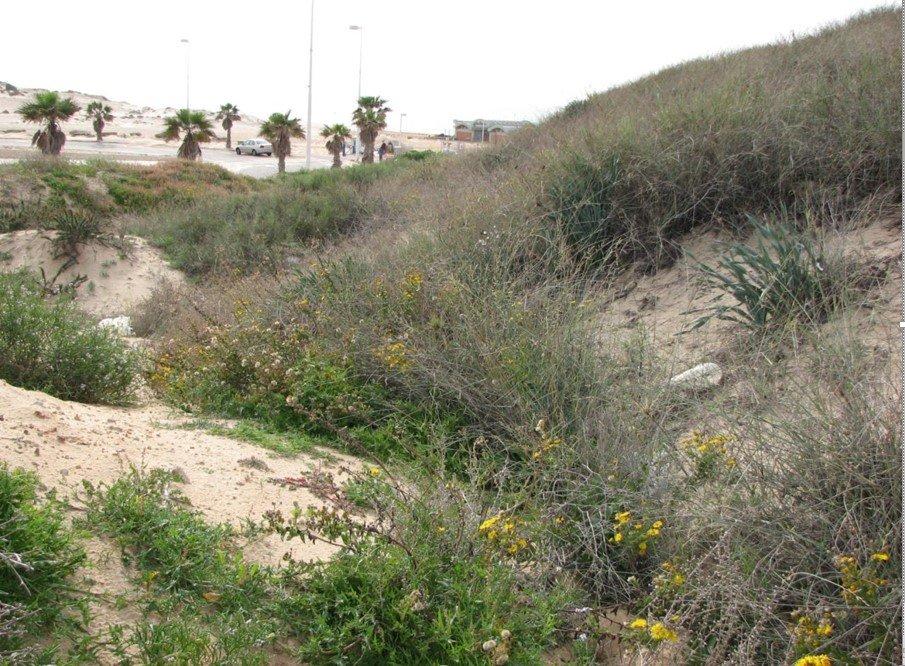 חבצלת החוף, דו פרק חופי, שמים -אוויר, אבן, רותם המדבר, אד...
