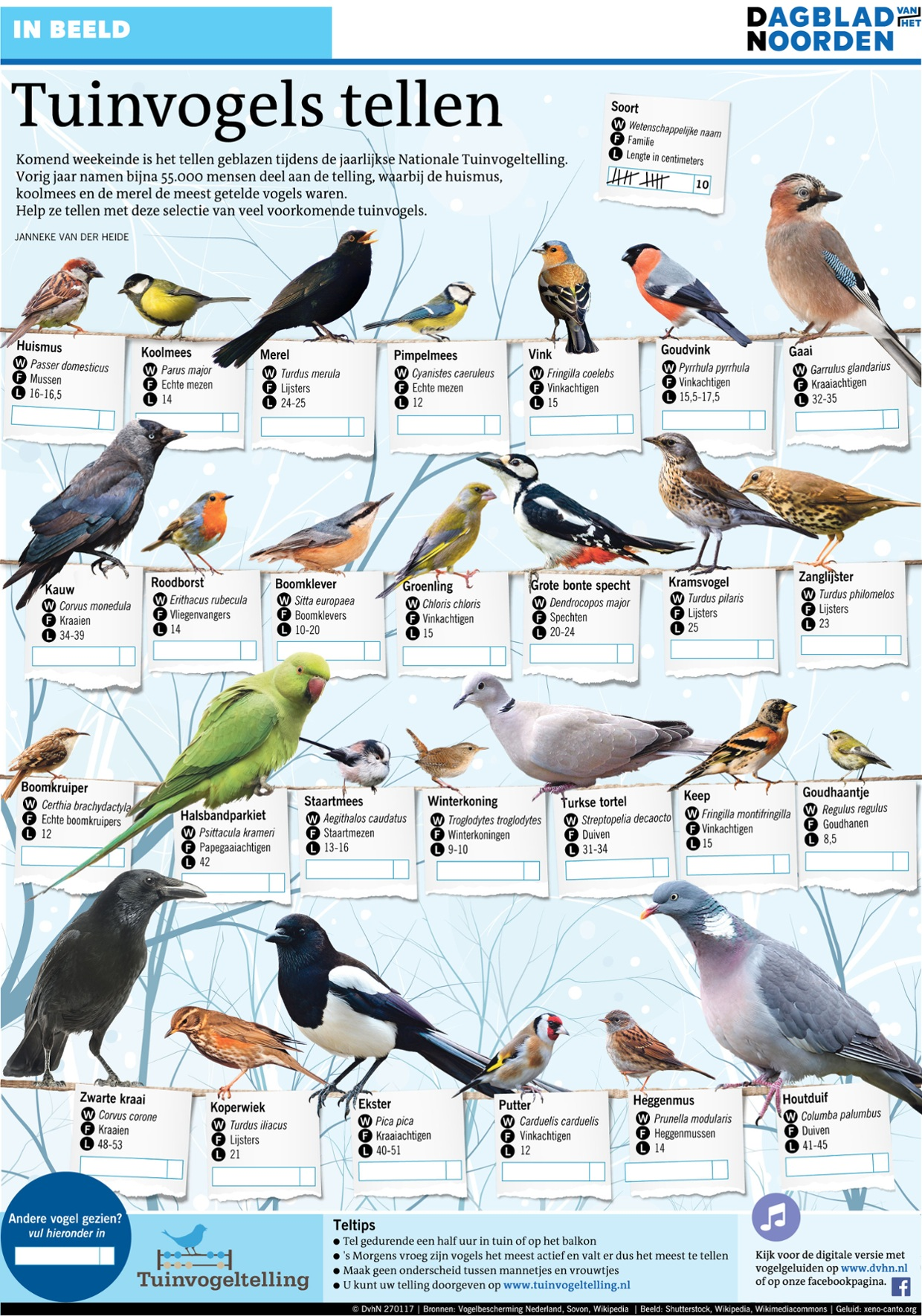 Tuinvogels tellen