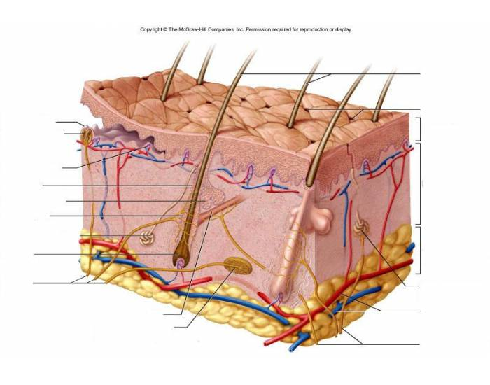 Skin tag anatomy