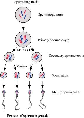 mature free video polykani sperma