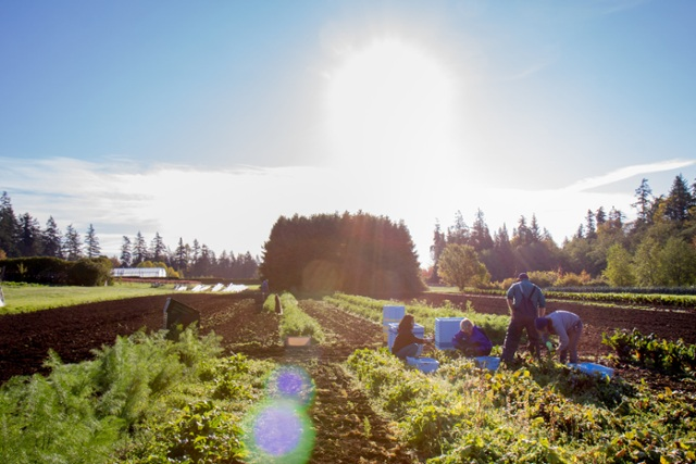 Organic farming doesn't always deliver benefits, UBC study