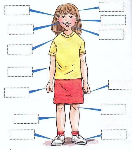 Lichaamsdelen frans thinglink for Ladenblok in het frans
