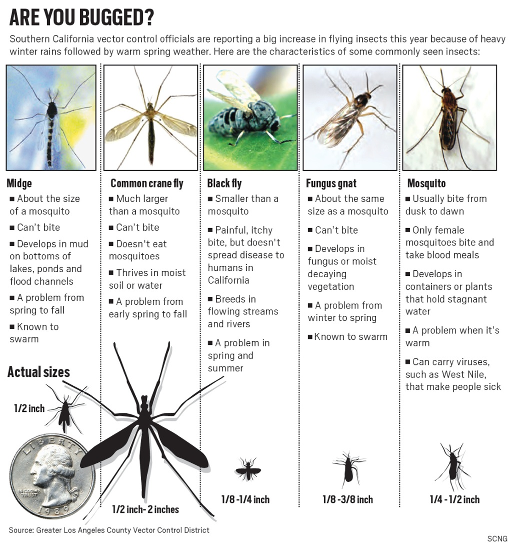 Hordes Of Insects Are Bugging Inland Residents Thanks To