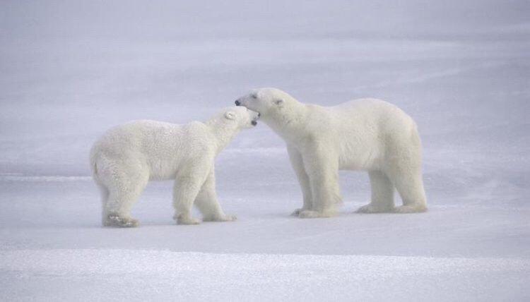 The Arctic Tundra Biome By  Yesenia Vasquez