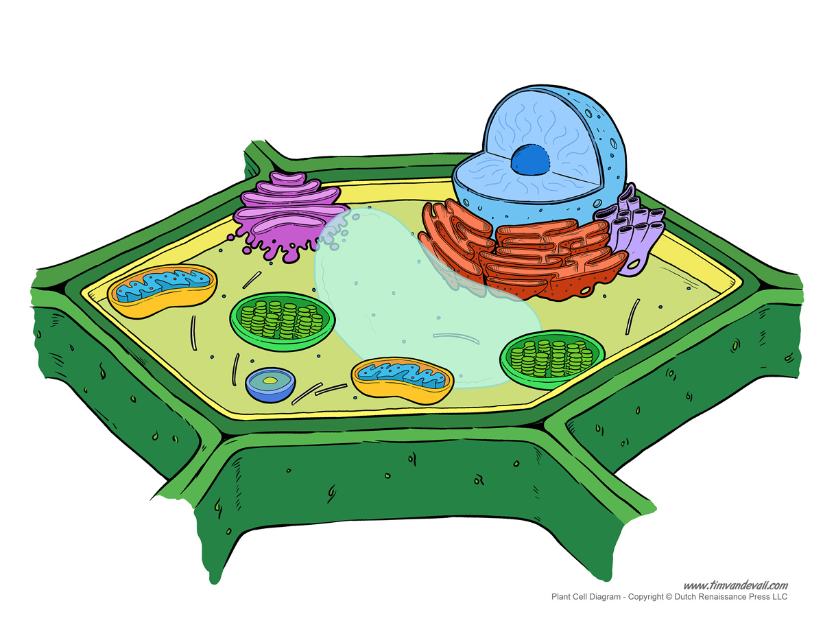 Remix of nucleolus nucleus cell wall cell membrane thinglink ccuart Images