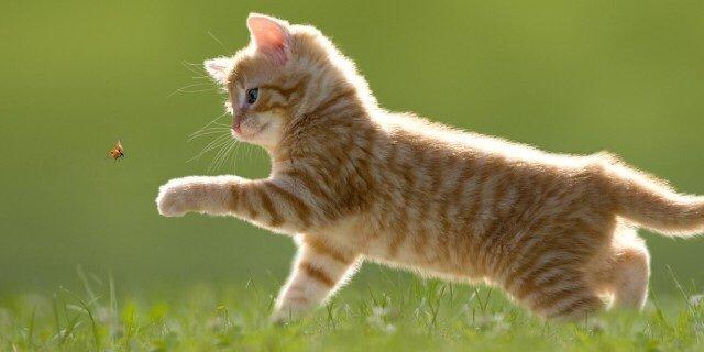 Gatto thinglink for Allontanare i gatti
