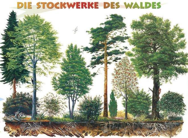 Die Stockwerke des Waldes