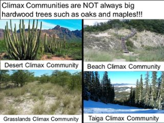 Ecological succession thinglink secondary succession publicscrutiny Choice Image